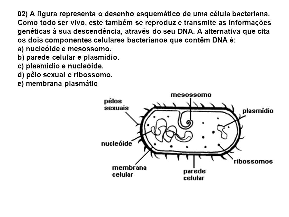 02) A figura representa o desenho esquemático de uma célula bacteriana. Como todo ser vivo, este também se reproduz e transmite as informações genétic