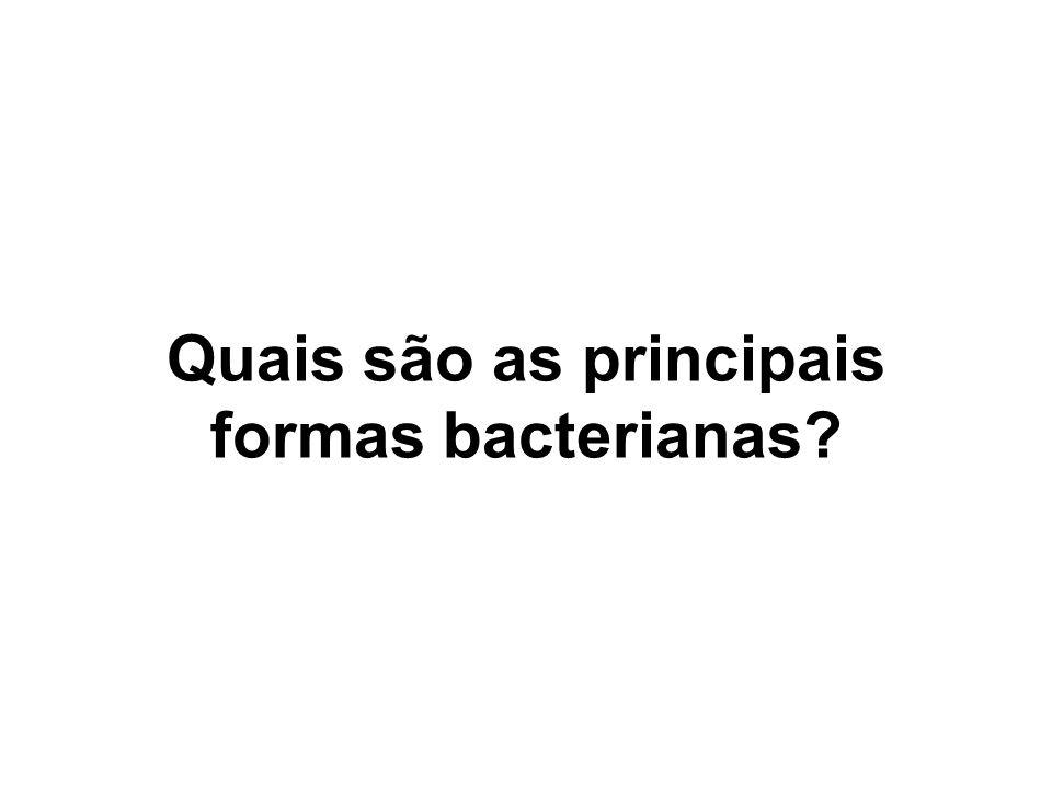 Quais são as principais formas bacterianas?