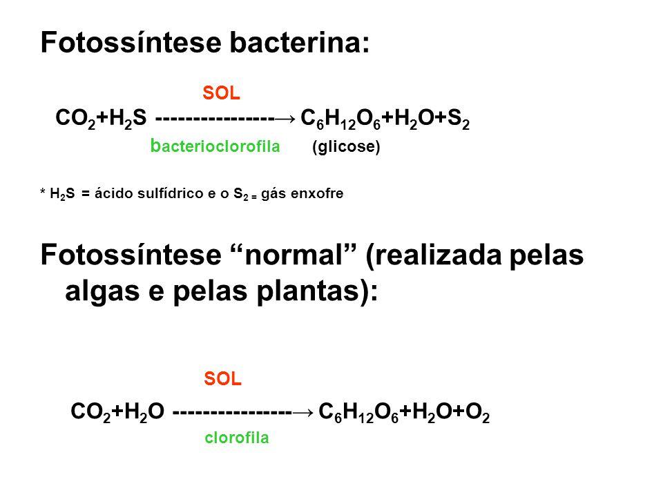 Fotossíntese bacterina: SOL CO 2 +H 2 S ---------------- C 6 H 12 O 6 +H 2 O+S 2 b acterioclorofila (glicose) * H 2 S = ácido sulfídrico e o S 2 = gás