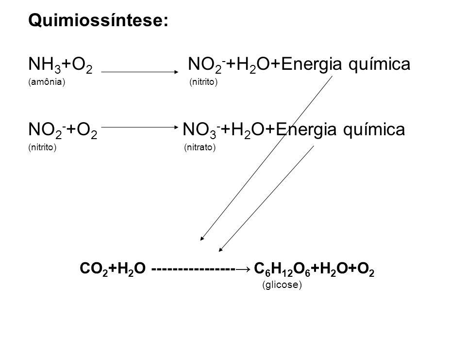 Quimiossíntese: NH 3 +O 2 NO 2 - +H 2 O+Energia química (amônia) (nitrito) NO 2 - +O 2 NO 3 - +H 2 O+Energia química (nitrito) (nitrato) CO 2 +H 2 O -