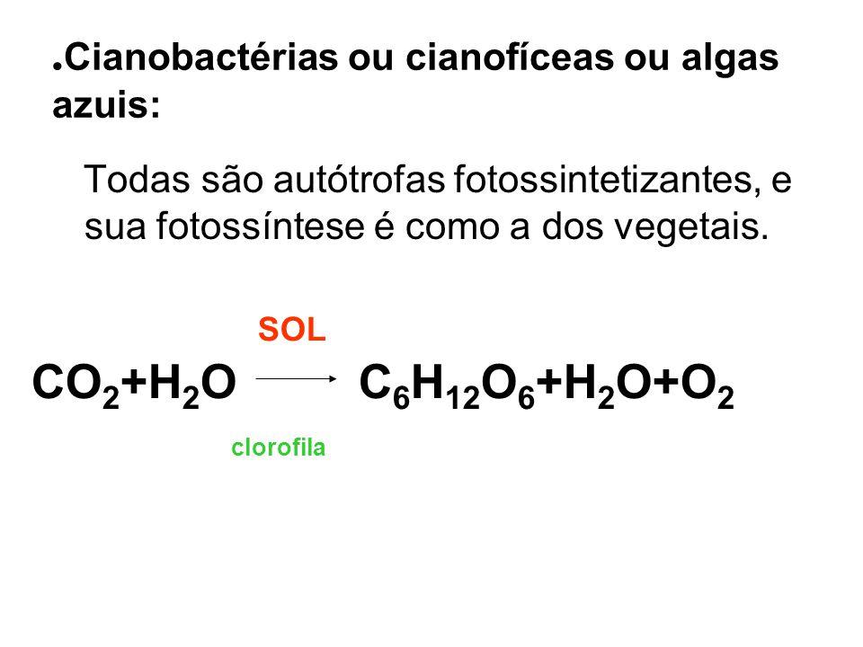 . Cianobactérias ou cianofíceas ou algas azuis: Todas são autótrofas fotossintetizantes, e sua fotossíntese é como a dos vegetais. SOL CO 2 +H 2 O C 6