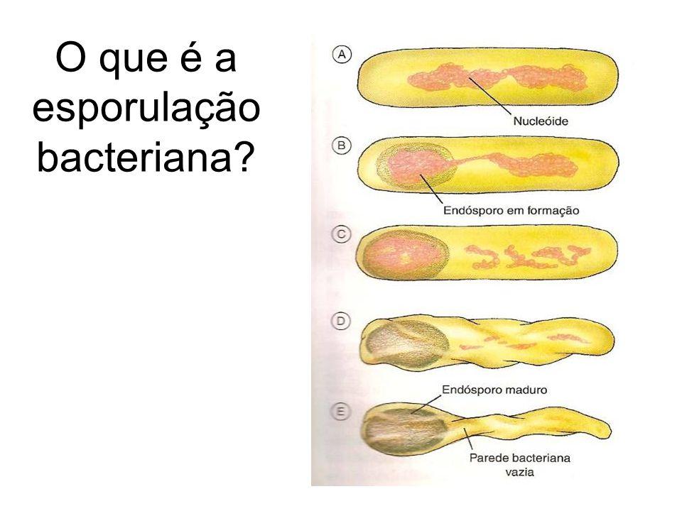 O que é a esporulação bacteriana?