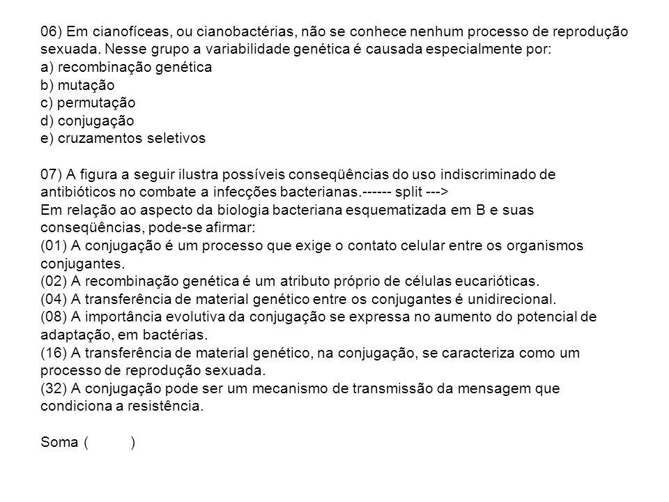 06) Em cianofíceas, ou cianobactérias, não se conhece nenhum processo de reprodução sexuada. Nesse grupo a variabilidade genética é causada especialme
