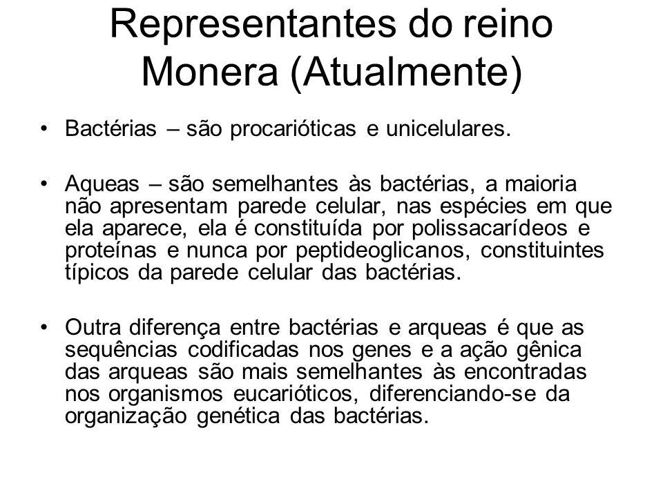 Representantes do reino Monera (Atualmente) Bactérias – são procarióticas e unicelulares. Aqueas – são semelhantes às bactérias, a maioria não apresen