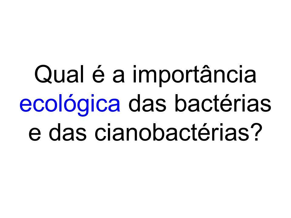 Qual é a importância ecológica das bactérias e das cianobactérias?