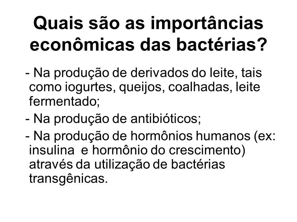 Quais são as importâncias econômicas das bactérias? - Na produção de derivados do leite, tais como iogurtes, queijos, coalhadas, leite fermentado; - N
