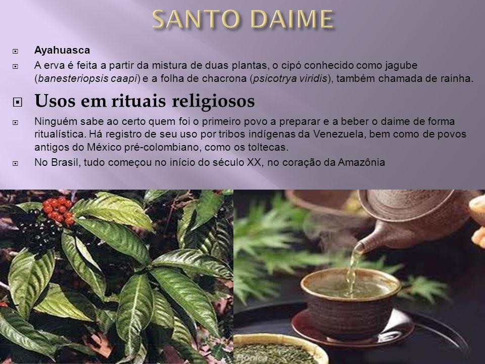 Ayahuasca A erva é feita a partir da mistura de duas plantas, o cipó conhecido como jagube (banesteriopsis caapi) e a folha de chacrona (psicotrya vir