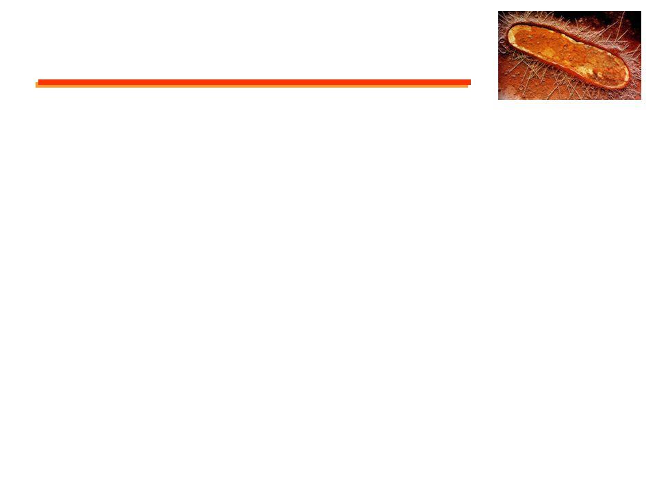 Parede celular: método de Gram Bactéria gram-positiva Esquema de bactéria com parte da célula removida.