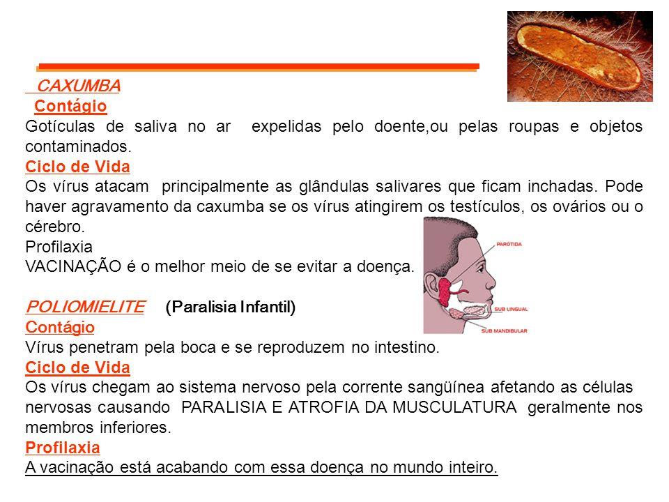 CAXUMBA Contágio Gotículas de saliva no ar expelidas pelo doente,ou pelas roupas e objetos contaminados. Ciclo de Vida Os vírus atacam principalmente