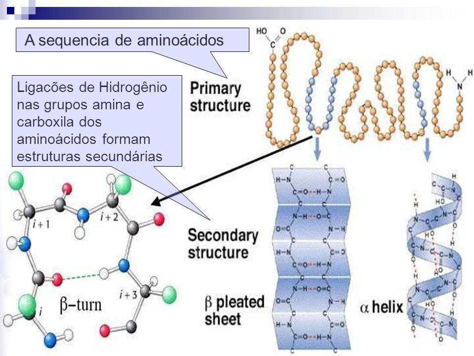 Ligacões de Hidrogênio nas grupos amina e carboxila dos aminoácidos formam estruturas secundárias A sequencia de aminoácidos