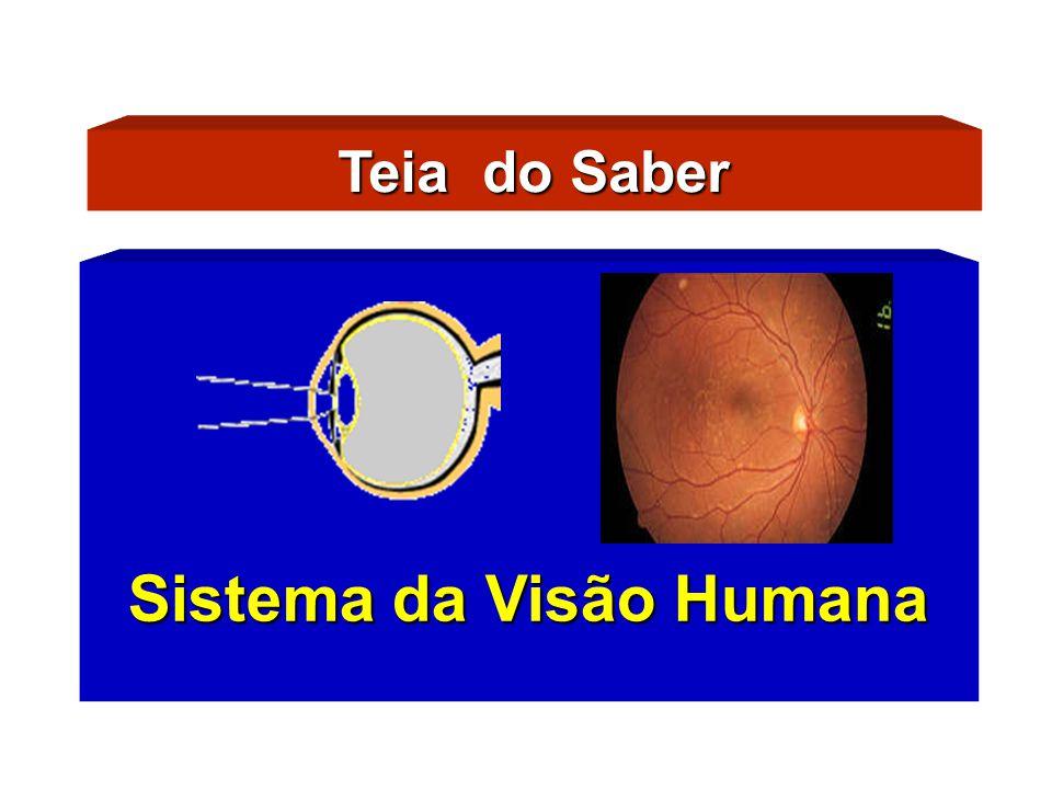 Características Físicas do Olho Humano Sistema da Visão Humana Eixo Óptico e Eixo Visual A córnea e o cristalino atuam como lentes convergentes.A córnea e o cristalino atuam como lentes convergentes.