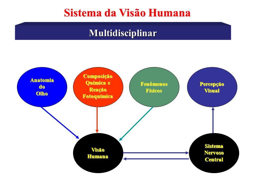 Ilusões Ópticas Sistema da Visão Humana Quando fixamos o olhar na figura, ´da impressão de pequenos círculos com tonalidade cinza entre os vértices do quadrados escuros.