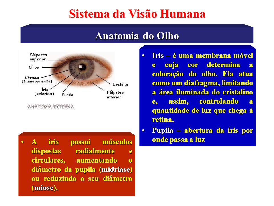 Sistema da Visão Humana Características do Humor Aquoso Características Físico-Químicas Quantidade : 0,15 – 0,35 mlQuantidade : 0,15 – 0,35 ml Densidade : 1,002 – 1,009 g/cm 3Densidade : 1,002 – 1,009 g/cm 3 Ìndice de refração: 1,333 – 1,337Ìndice de refração: 1,333 – 1,337 pH : 7,17 – 7,76pH : 7,17 – 7,76 Composição Química Cloretos, Glicose, Dióxido de Carbono, Aminoácidos, Ácido Láctico, Uréia, Proteínas, Ácido Ascórbico, Fósforo inorgânico, Ácido cítrico, Ácido úrico.
