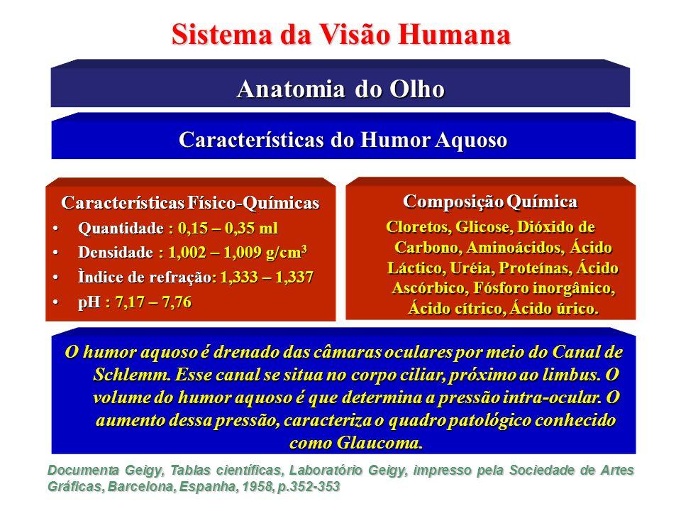 Características Físicas do Olho Humano Sistema da Visão Humana A Óptica do Olho Humano Objeto Imagem Refração Lentes Luz ReflexãoPolarização Difração Humor Vítreo Humor Aquoso Córnea