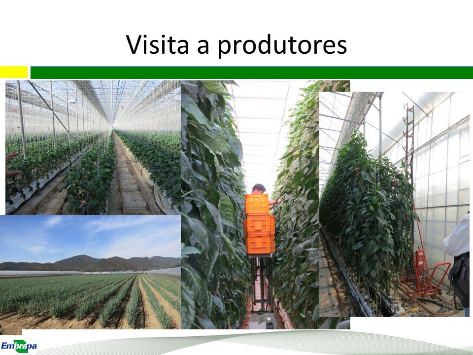 Observações Há grande proximidade entre institutos de pesquisa e setor privado; As propriedades possuem grande diversidade de máquinas e equipamentos; A produção sob cultivo protegido é muito tecnificada e autamatizada.