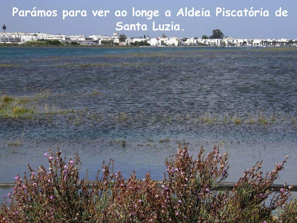 Parámos para ver ao longe a Aldeia Piscatória de Santa Luzia.