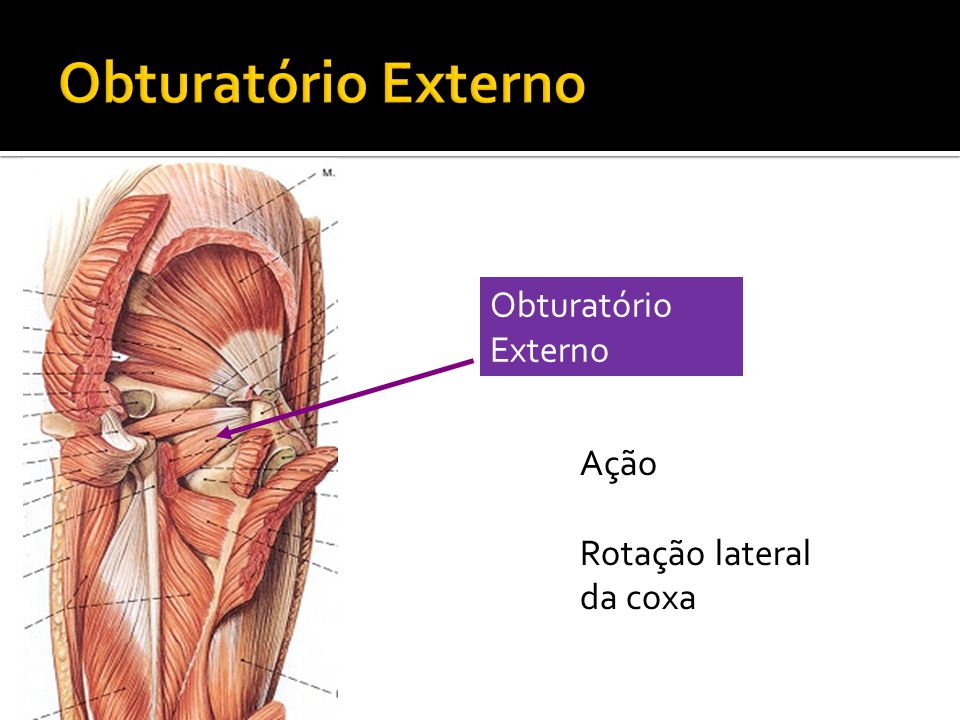Obturatório Externo Ação Rotação lateral da coxa
