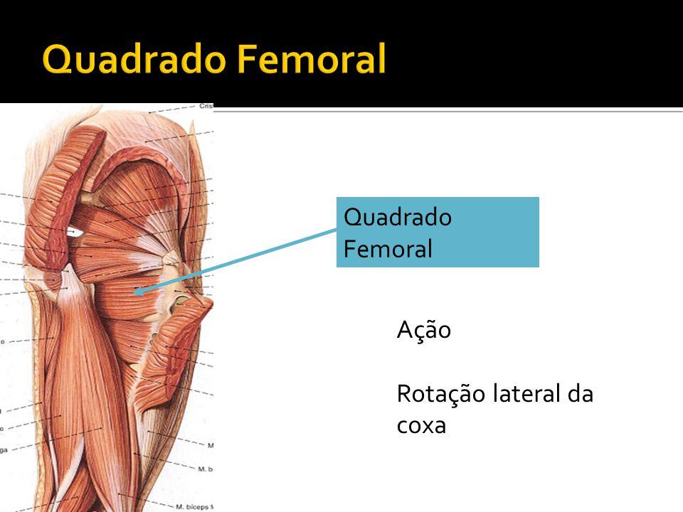 Quadrado Femoral Ação Rotação lateral da coxa
