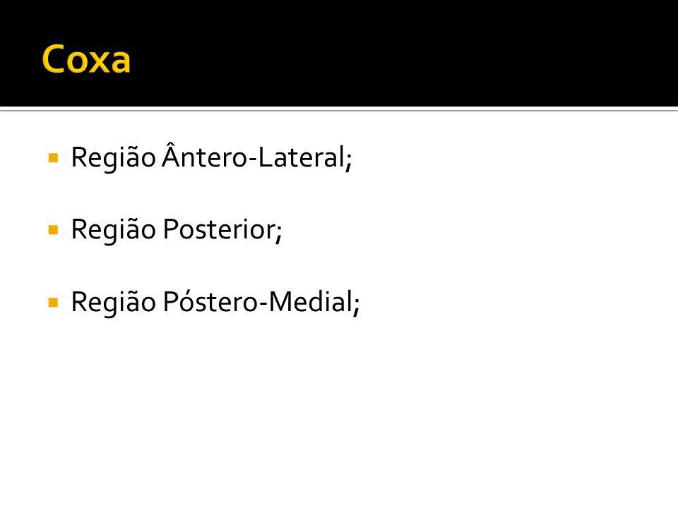 Região Ântero-Lateral; Região Posterior; Região Póstero-Medial;