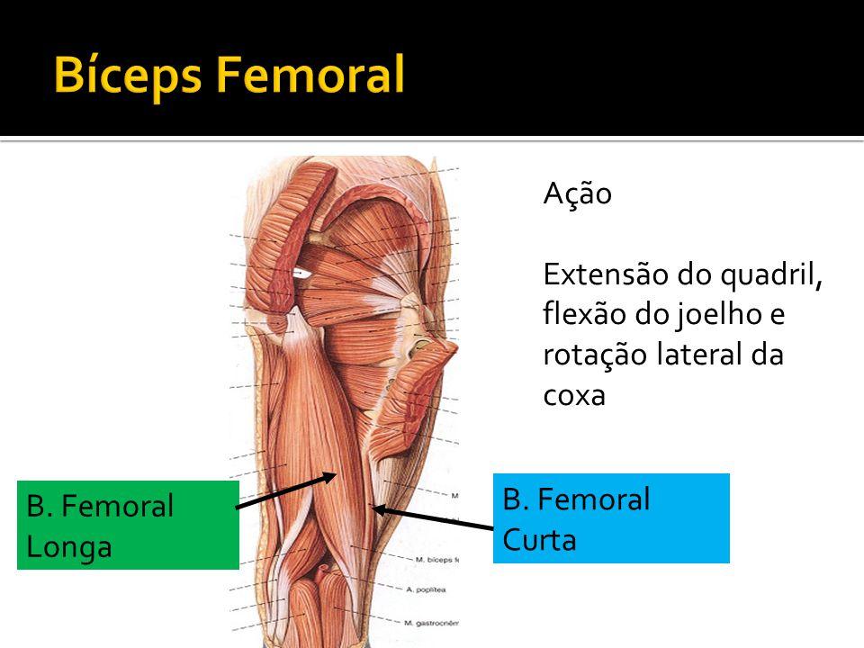 B. Femoral Curta B. Femoral Longa Ação Extensão do quadril, flexão do joelho e rotação lateral da coxa