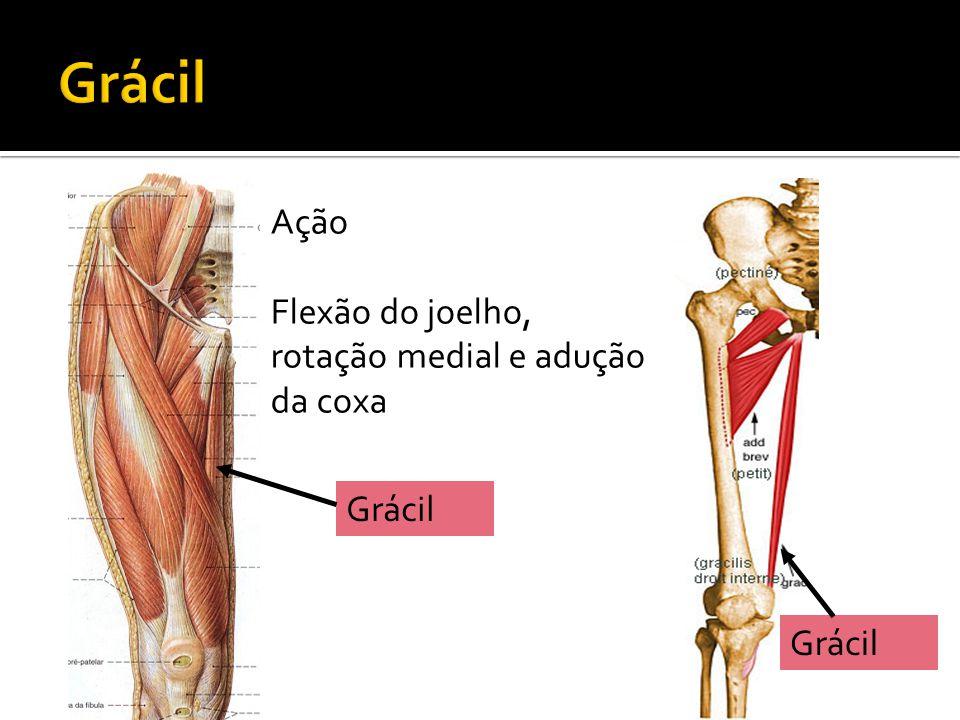 Grácil Ação Flexão do joelho, rotação medial e adução da coxa