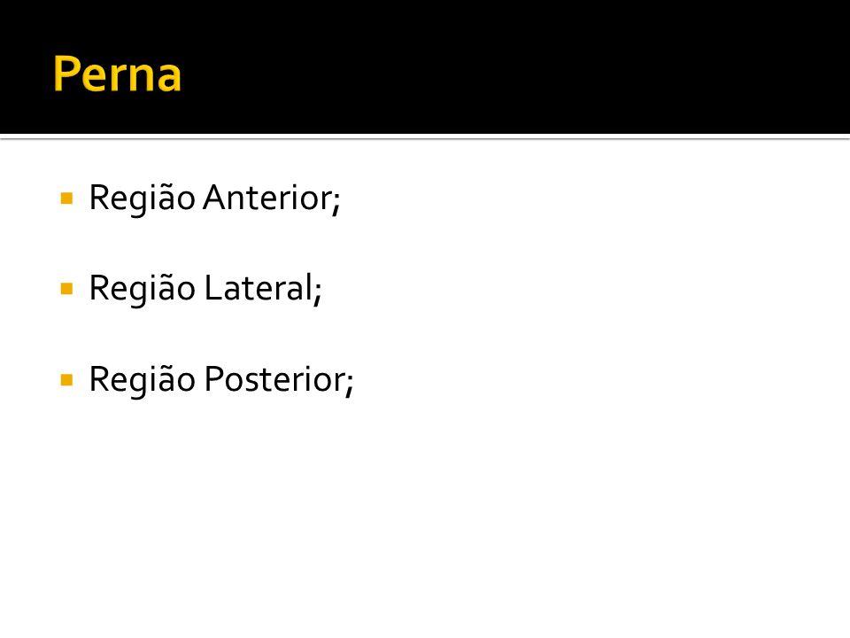 Região Anterior; Região Lateral; Região Posterior;