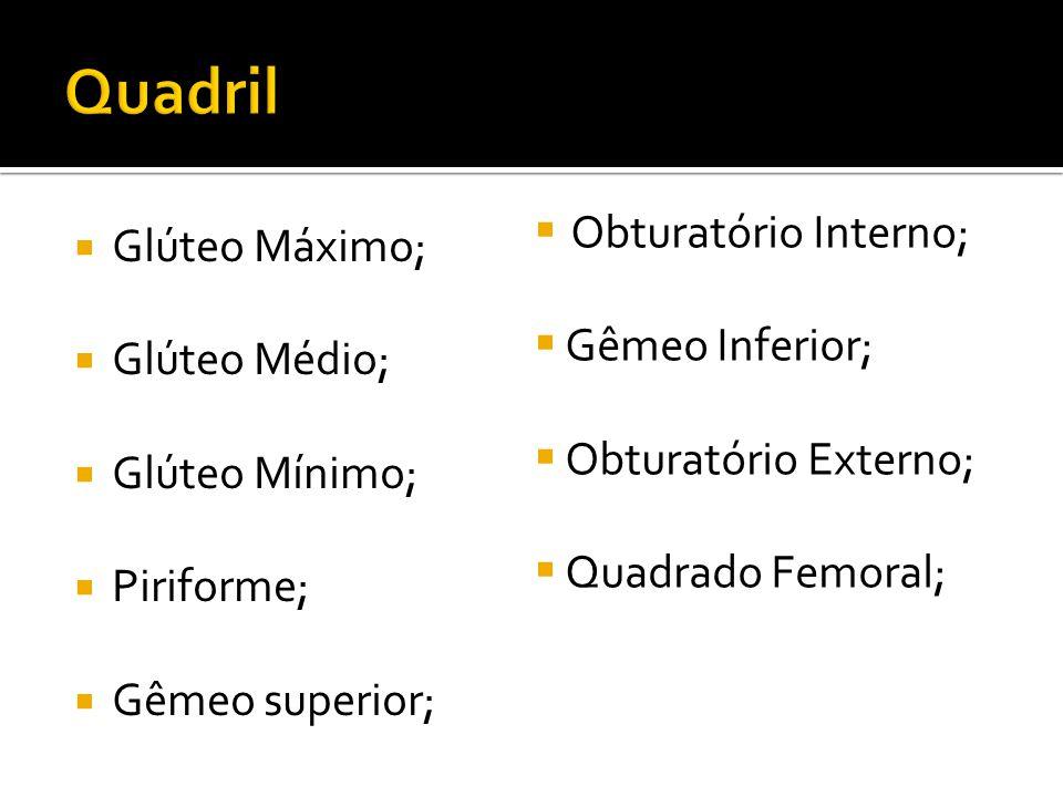 Glúteo Máximo; Glúteo Médio; Glúteo Mínimo; Piriforme; Gêmeo superior; Obturatório Interno; Gêmeo Inferior; Obturatório Externo; Quadrado Femoral;