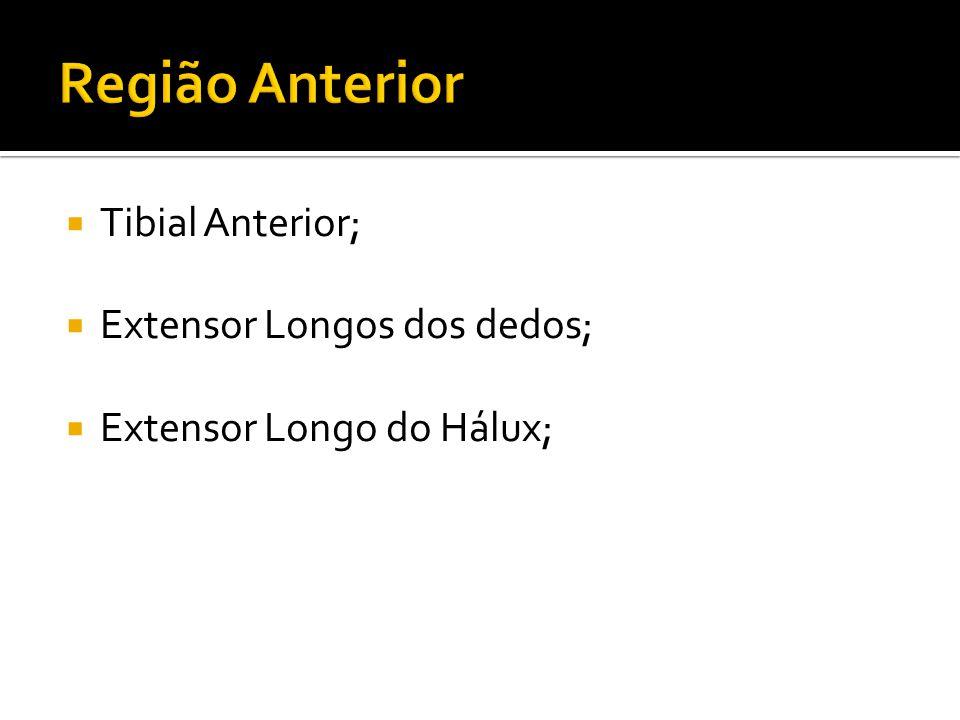 Tibial Anterior; Extensor Longos dos dedos; Extensor Longo do Hálux;