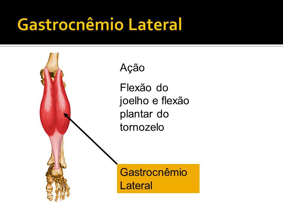 Gastrocnêmio Lateral Ação Flexão do joelho e flexão plantar do tornozelo