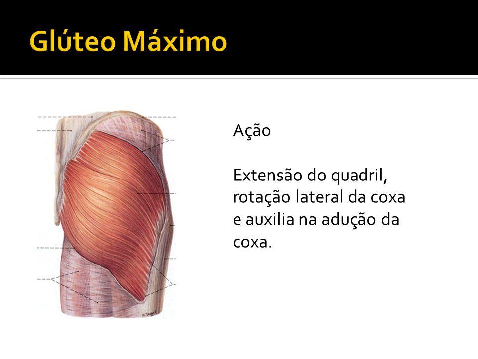 Tensor da Fáscia Lata Ação Tenciona a fáscia lata, rotação medial da coxa, inclinação da pelve, estabiliza a pelve sobre o fêmur e o fêmur sobre a tíbia