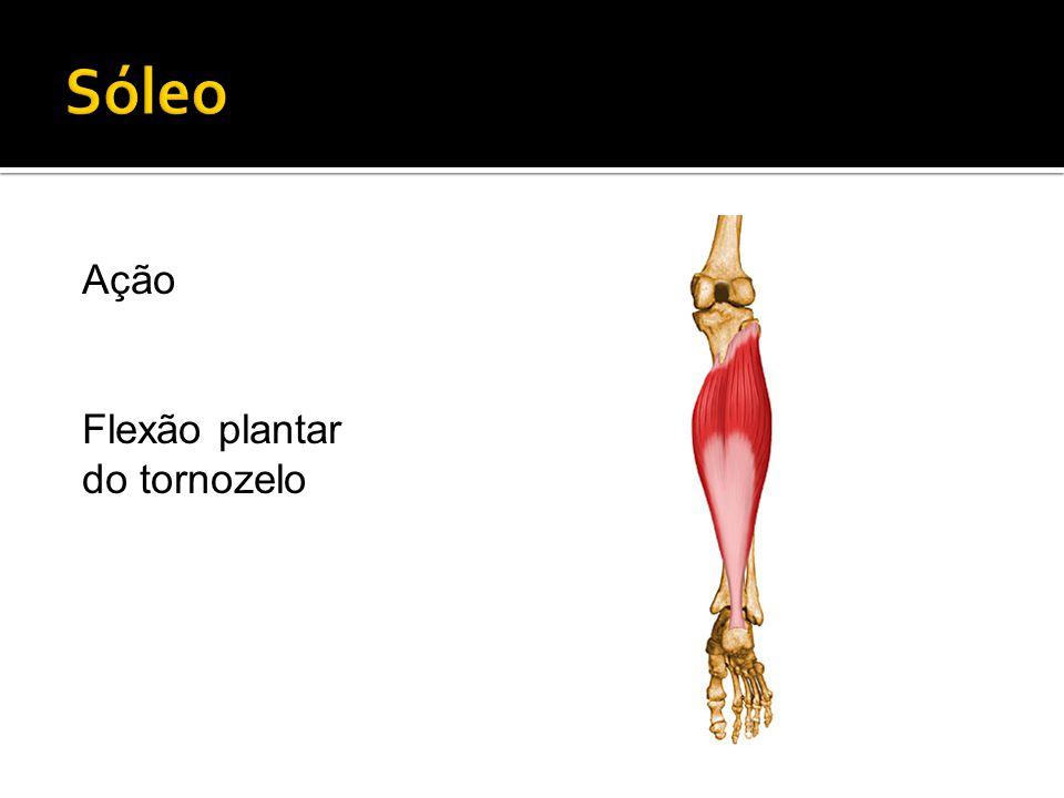 Ação Flexão plantar do tornozelo