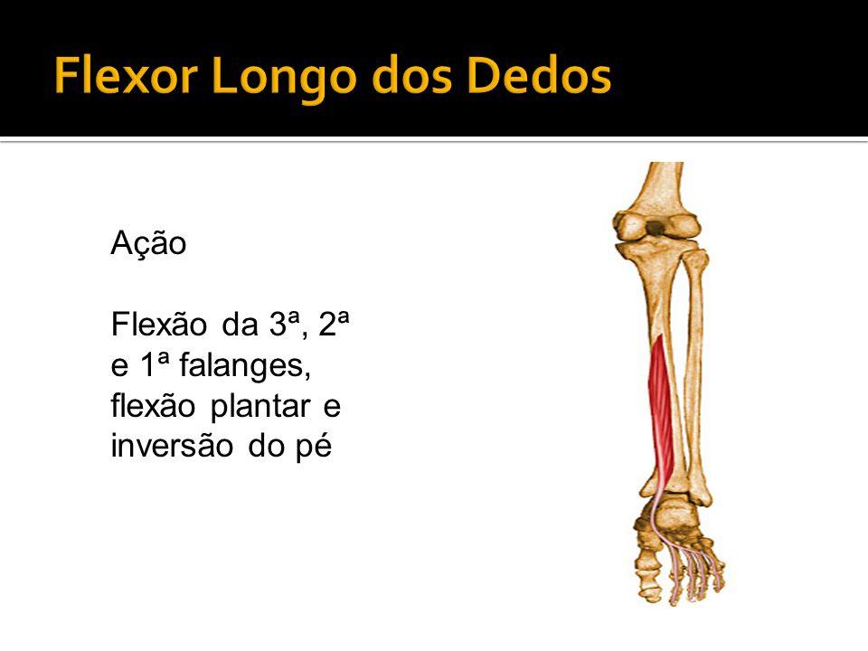 Ação Flexão da 3ª, 2ª e 1ª falanges, flexão plantar e inversão do pé