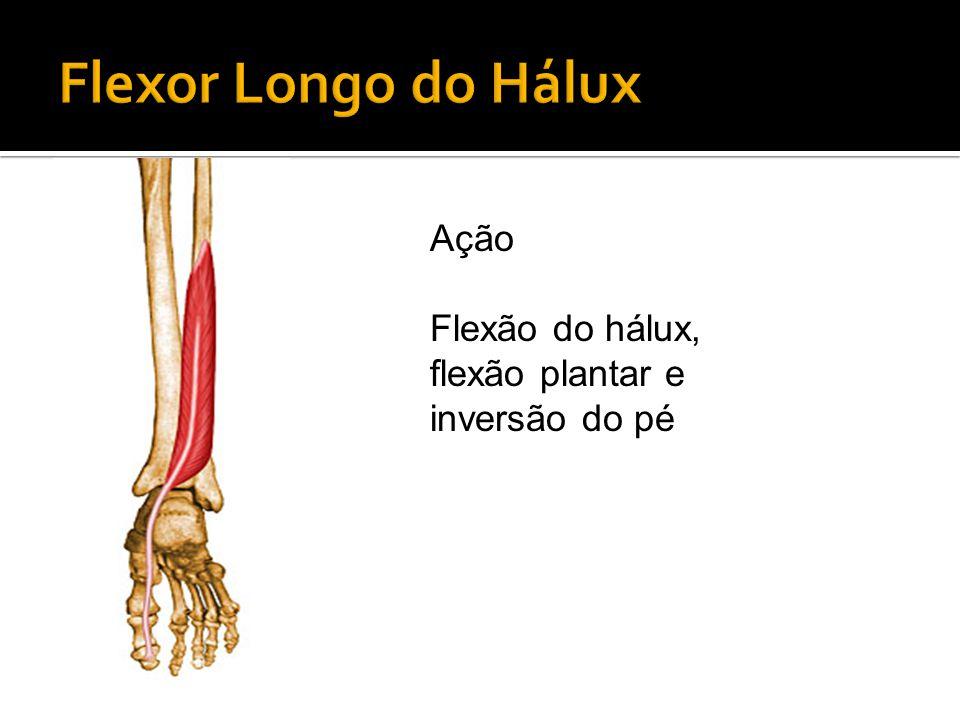 Ação Flexão do hálux, flexão plantar e inversão do pé