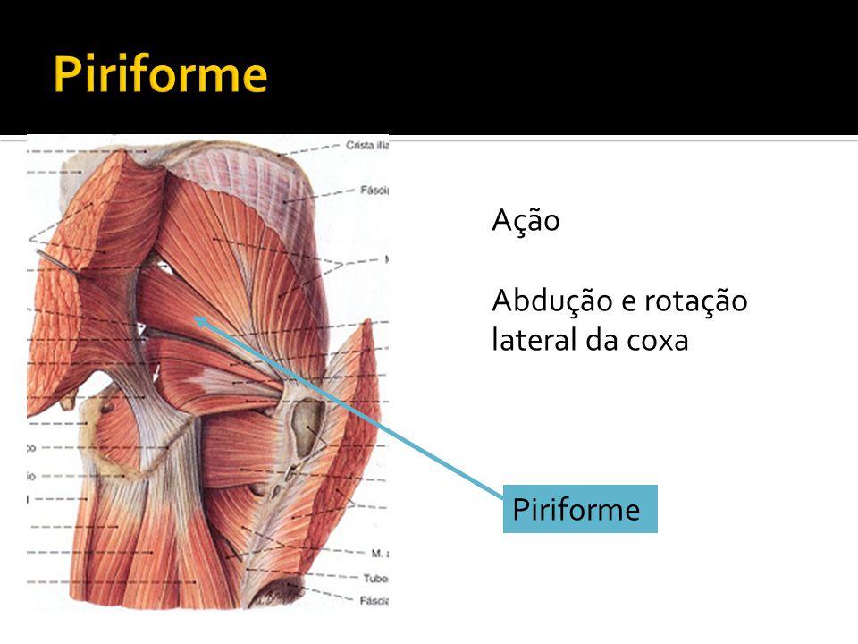 Piriforme Ação Abdução e rotação lateral da coxa