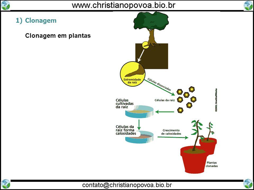 1)Clonagem Clonagem em plantas