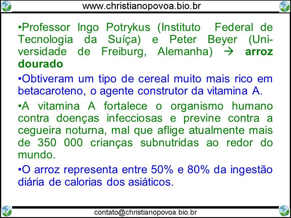 Professor Ingo Potrykus (Instituto Federal de Tecnologia da Suíça) e Peter Beyer (Uni- versidade de Freiburg, Alemanha) arroz dourado Obtiveram um tipo de cereal muito mais rico em betacaroteno, o agente construtor da vitamina A.