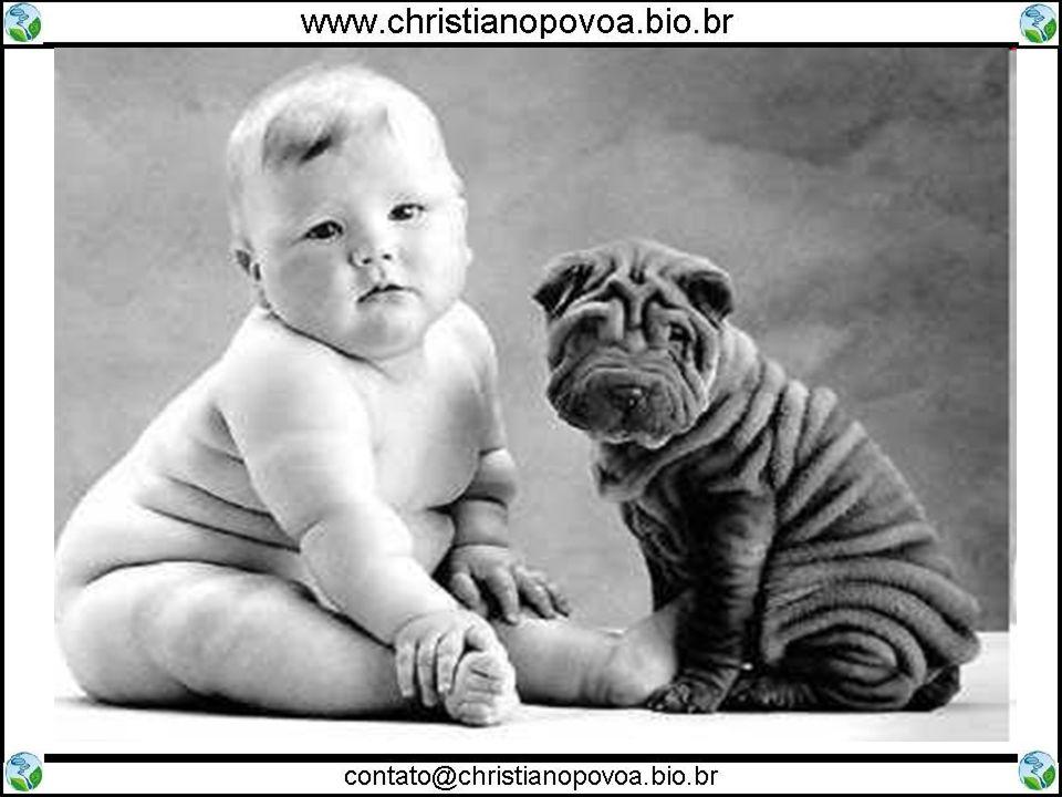 3) Tecnologia do DNA Recombinante Identificação de pessoas pelo DNA Teste de paternidade
