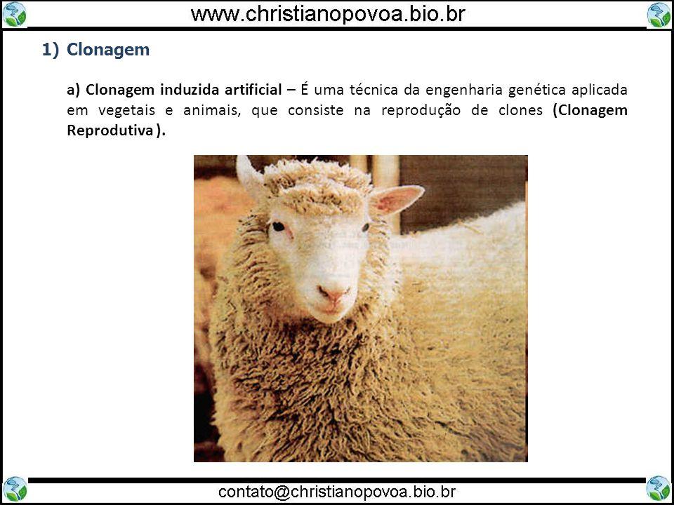 1)Clonagem a) Clonagem induzida artificial – É uma técnica da engenharia genética aplicada em vegetais e animais, que consiste na reprodução de clones (Clonagem Reprodutiva ).