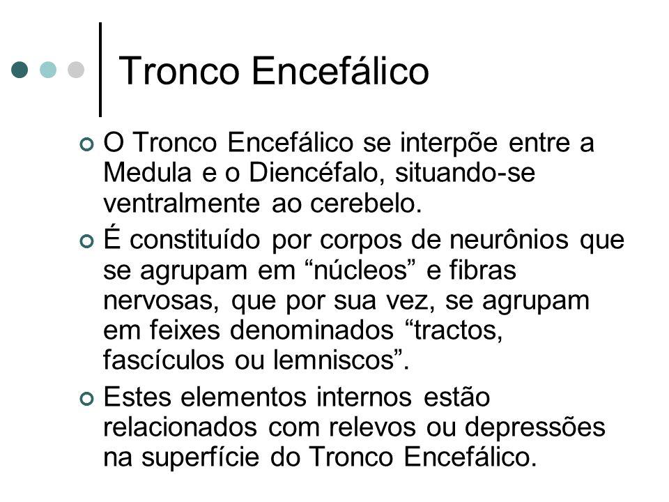 Tronco Encefálico O Tronco Encefálico se interpõe entre a Medula e o Diencéfalo, situando-se ventralmente ao cerebelo. É constituído por corpos de neu