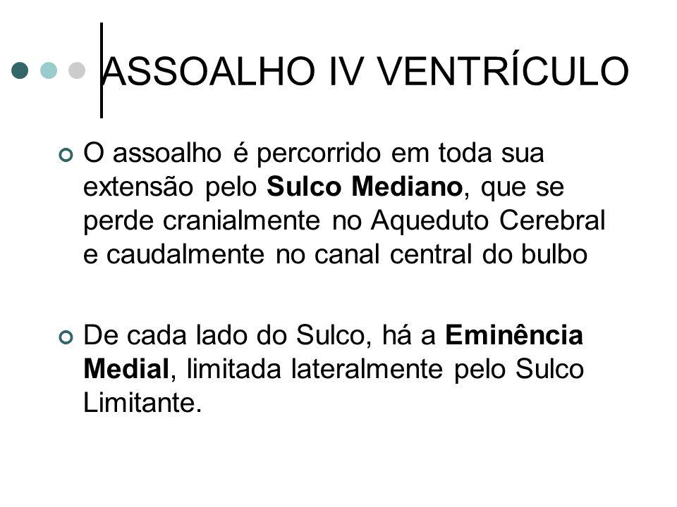 ASSOALHO IV VENTRÍCULO O assoalho é percorrido em toda sua extensão pelo Sulco Mediano, que se perde cranialmente no Aqueduto Cerebral e caudalmente n