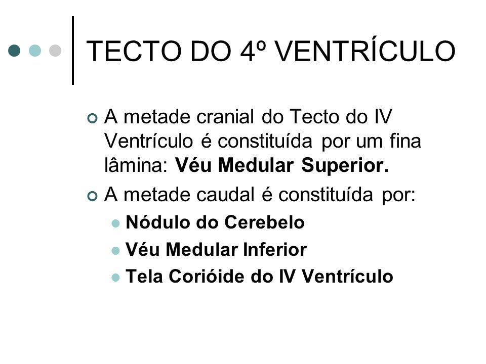 TECTO DO 4º VENTRÍCULO A metade cranial do Tecto do IV Ventrículo é constituída por um fina lâmina: Véu Medular Superior. A metade caudal é constituíd