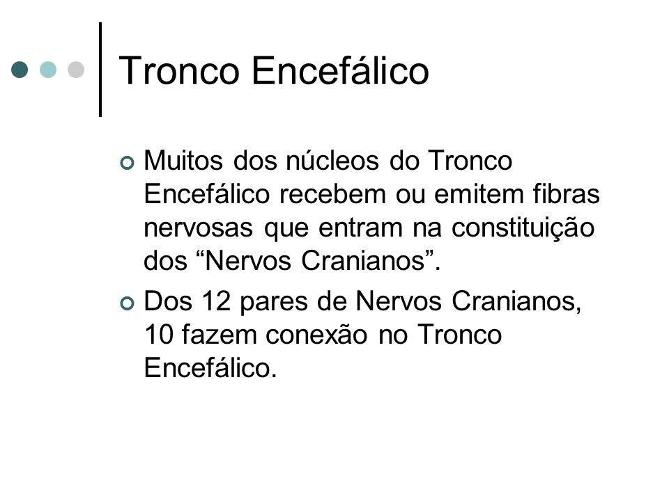 Tronco Encefálico Muitos dos núcleos do Tronco Encefálico recebem ou emitem fibras nervosas que entram na constituição dos Nervos Cranianos. Dos 12 pa