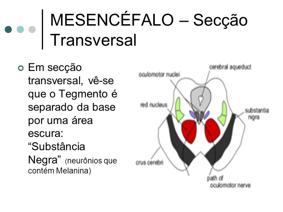 MESENCÉFALO – Secção Transversal Em secção transversal, vê-se que o Tegmento é separado da base por uma área escura: Substância Negra ( neurônios que