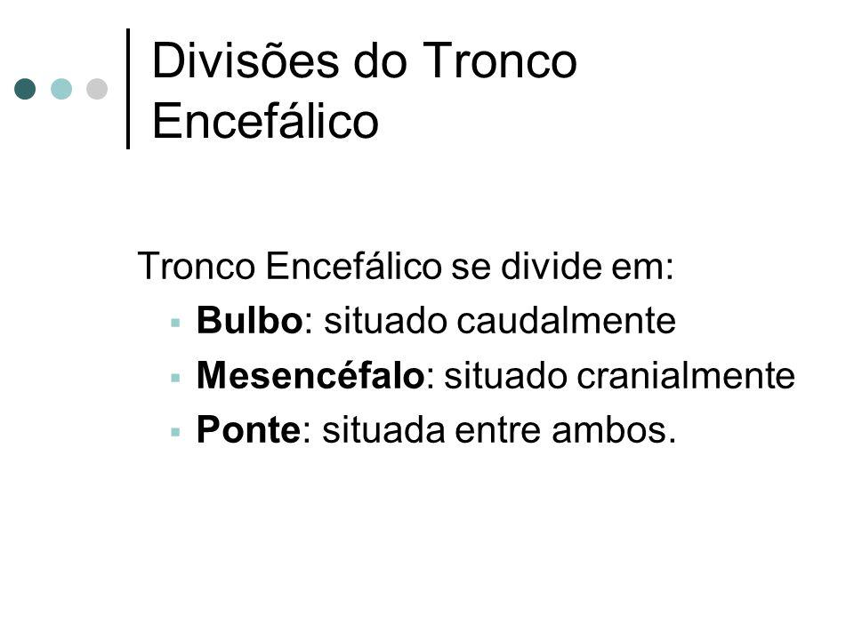 Divisões do Tronco Encefálico Tronco Encefálico se divide em: Bulbo: situado caudalmente Mesencéfalo: situado cranialmente Ponte: situada entre ambos.