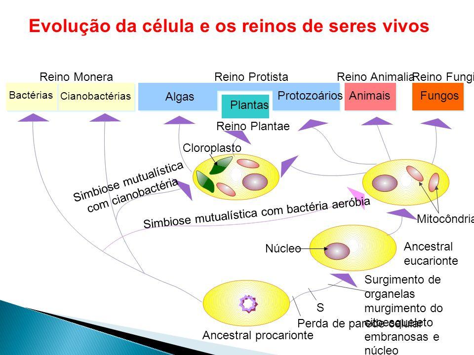 Comparação de tamanho Bactéria Vírus Célula anima l Núcleo