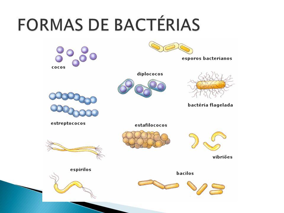 Procariontes (sem carioteca) Unicelulares Célula formada pelos quatro componentes fundamentais a qualquer célula: hialoplasma, ribossomos, cromatina (