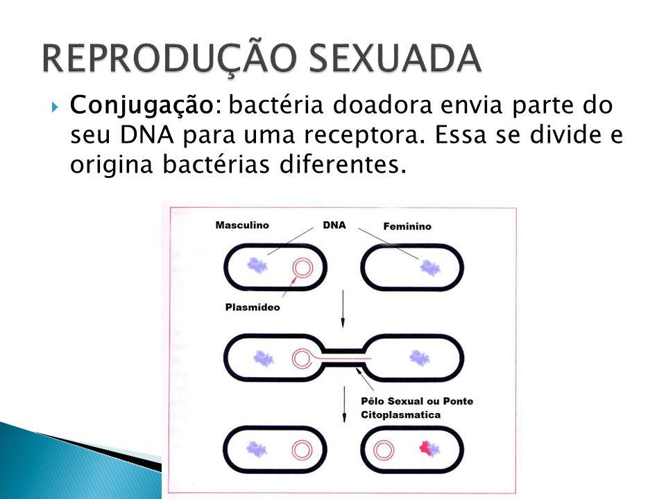 Divisão binária, bipartição ou cissiparidade Este tipo de reprodução é o processo em que uma célula se divide em duas, por mitose, e origina duas célu