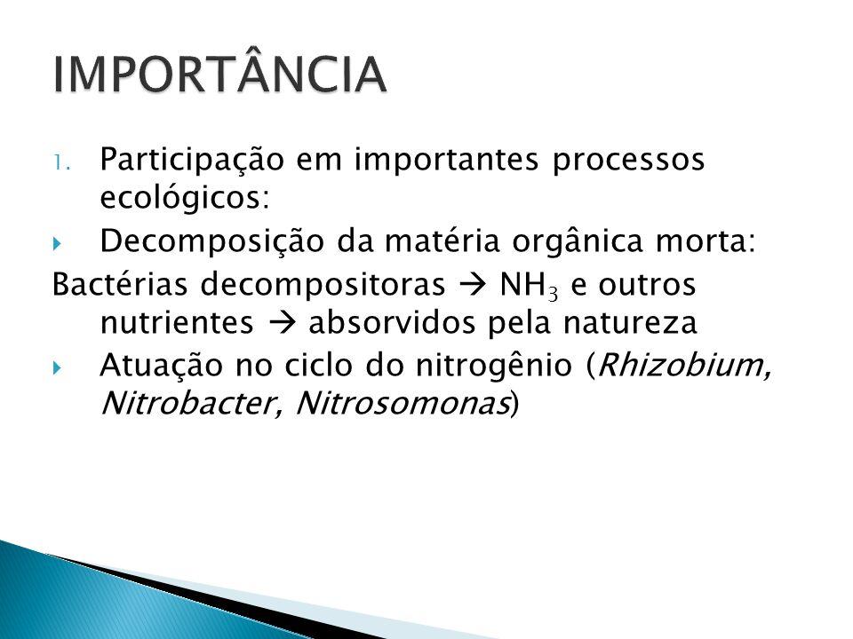 ReinoComponentesCritérios de classificação Monera bactérias e cianobactérias Procariontes ; Heterótrofos ou autótrofos; ProtistaAlgas e protozoáriosEu