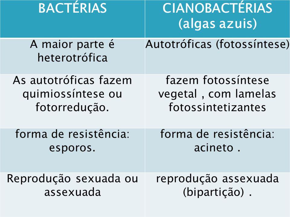 2. Uso industrial: Acetobacter: oxidação do álcool etílico ácido acético (vinagre); Lactobacillus e Lactococcus: conversão de lactose (açúcar do leite