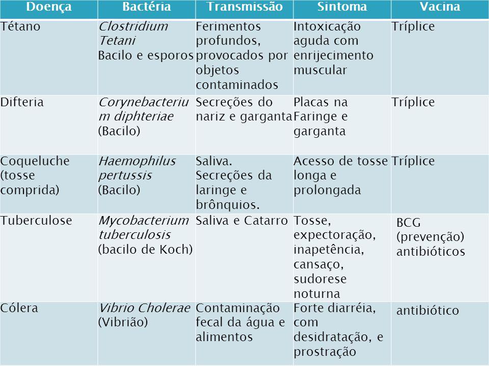 BACTÉRIASCIANOBACTÉRIAS (algas azuis) A maior parte é heterotrófica Autotróficas (fotossíntese) As autotróficas fazem quimiossíntese ou fotorredução.